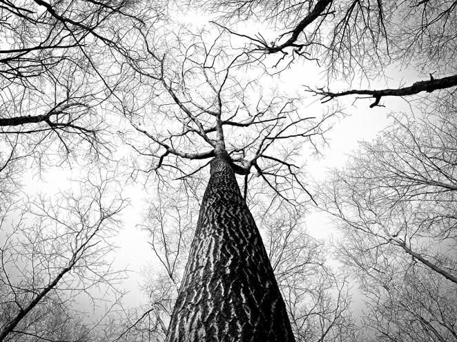 matt_borghi-tree-tapestry